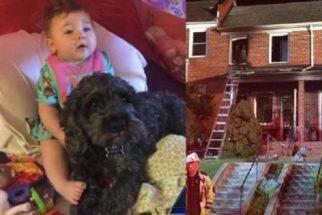 Herói: cão morre após salvar bebê de oito meses de incêndio