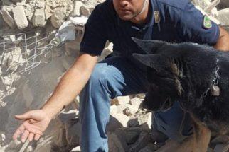 Heróis: cães salvam crianças vítimas de terremoto na Itália