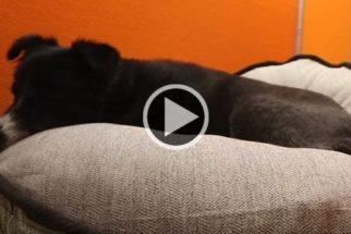 Homem compra camas para todos os cães de abrigo