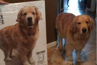 Jovem ganha totem do seu cão para levar para a universidade