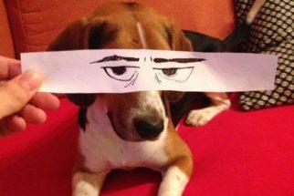 Artista cria ilustrações engraçadas para seu cachorro