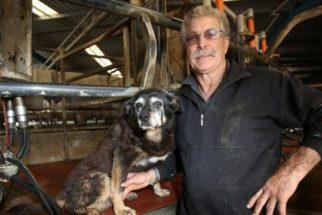 Conheça Bluey, o cão mais velho do livro dos recordes
