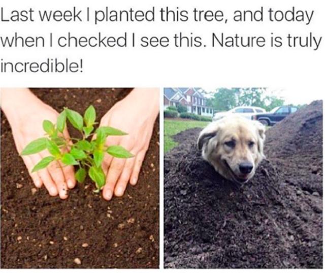 mulher-plantou-pe-de-cachorro