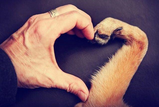 Projeto é destaque em ação a favor de animais abandonados