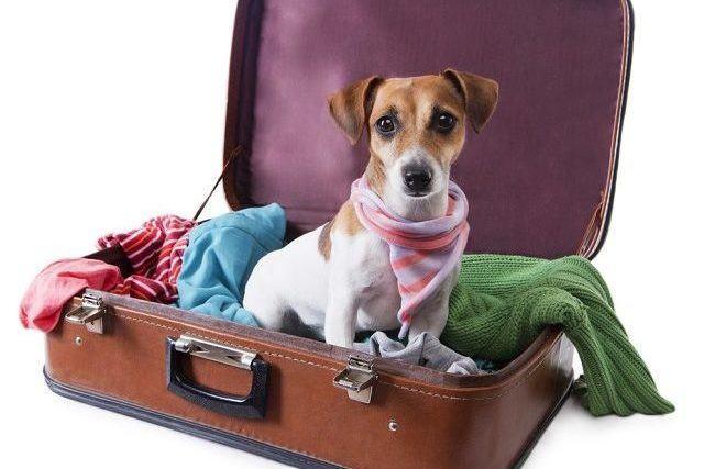 Saiba quais hotéis no Brasil aceitam cães?