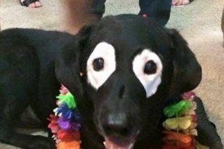 Cãozinho faz sucesso por ter manchas brancas ao redor dos olhos