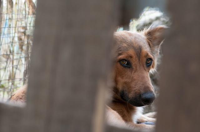 Saiba como denunciar pela internet casos de maus tratos a animais