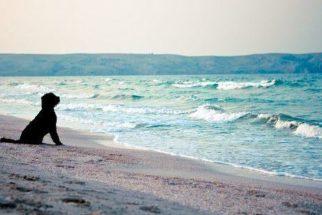Saiba se você pode ou não levar seu cachorro na praia