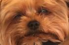se-segunda-feira-fosse-um-cachorro