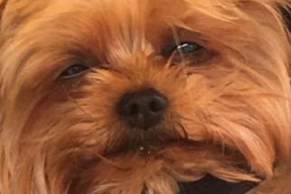 14 memes com cães que irão alegrar o seu dia