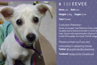 Mulher cria site temático de Pokémon para conseguir família para cadela