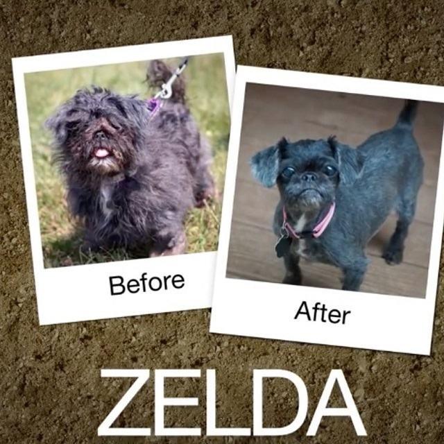 transformaçao-drastica-cadela-zelda