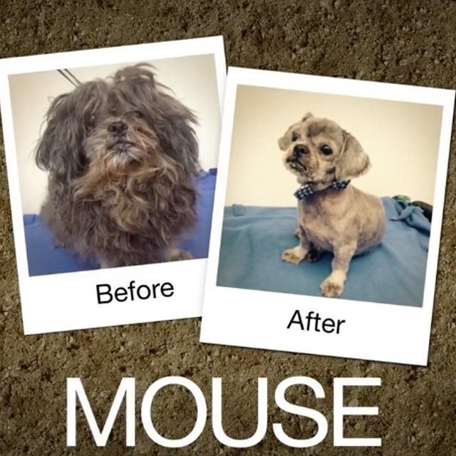 transformaçao-drastica-caozinho-mouse
