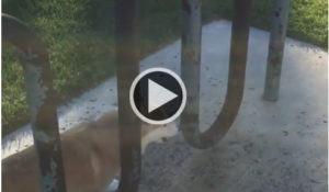 video-corgi-merece-medalha-olimpica-por-agilidade-e-fofura