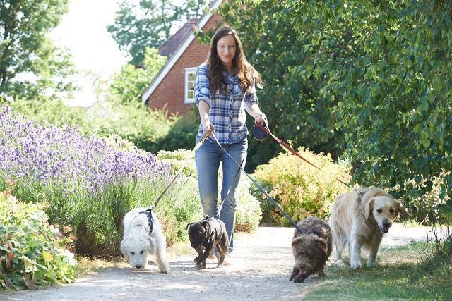 5 motivos para você levar o seu cão para passear todos os dias