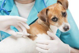 Empresas brasileiras que dispensam testes em animais