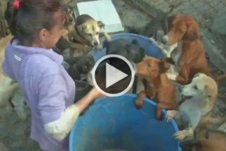 Animais vêm sendo abandonados devido a crise econômica venezuelana