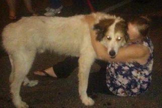 Após semanas desaparecido, cão é encontrado a 1700 km de casa