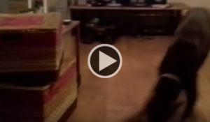 brincalhona-cadela-imita-crianca-deslizando-em-assoalho