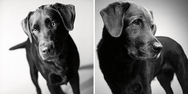 caozinho-corbet-dog-years