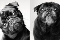 Fotógrafa cria ensaio mostrando como os cães envelhecem