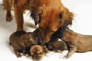 Descubra quando é o tempo certo de separar um filhote da mãe