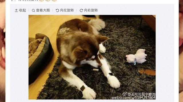 cachorro-mais-rico-da-china-com-dois-applewatchs-de-ouro