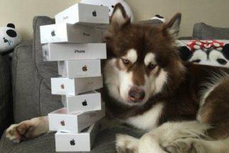 Cãozinho mais rico da China ganha 8 iPhones de seu tutor