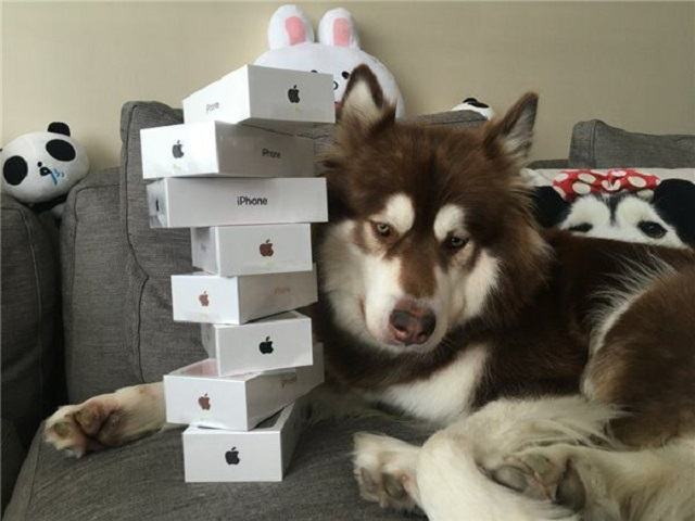 cachorro-mais-rico-da-china-com-oito-iphones