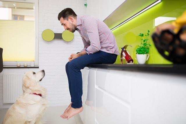 Cachorros entendem o que os humanos falam, afirma estudo
