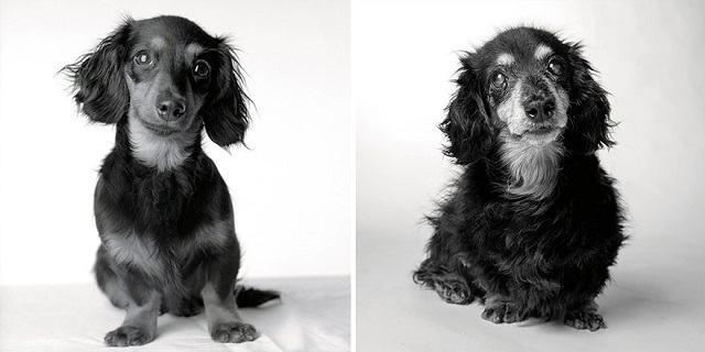 cadela-lily-dog-years