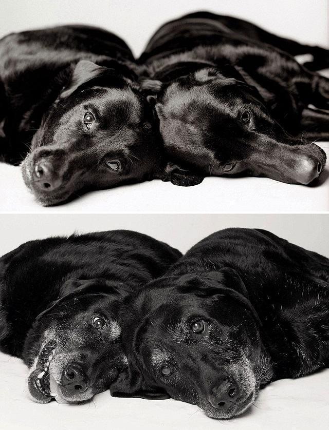 cadelas-maddie-e-ellie-dog-years