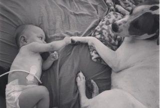Cão adotado ajuda a cuidar de bebê prematura da família