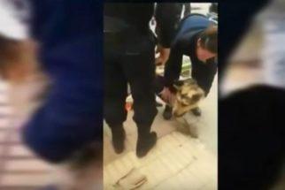 Cão é resgatado após passar quatro dias preso em bueiro