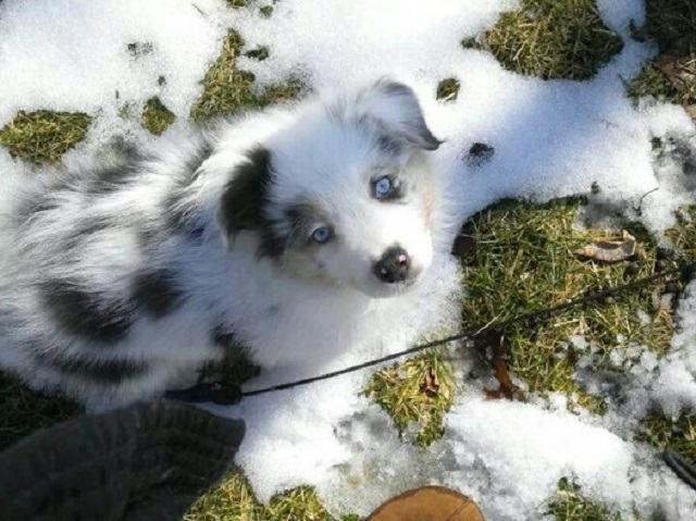 caozinho-branco-na-neve