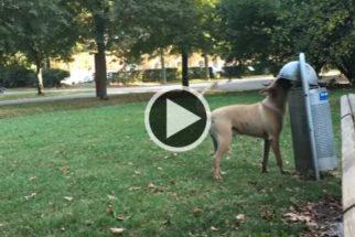 Cãozinho dá exemplo e mostra aonde o lixo deve ser jogado