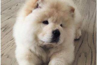 Cãozinho do cantor Justin Bieber ganha perfil no Instagram