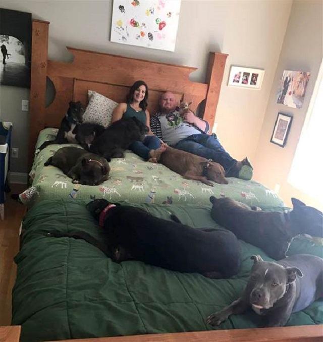casal-hughes-junto-a-seus-oito-caes-em-mega-cama