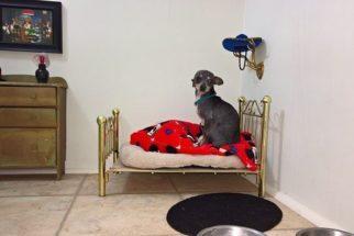 Cãozinho ganha quarto de baixo de escada no estilo Harry Potter