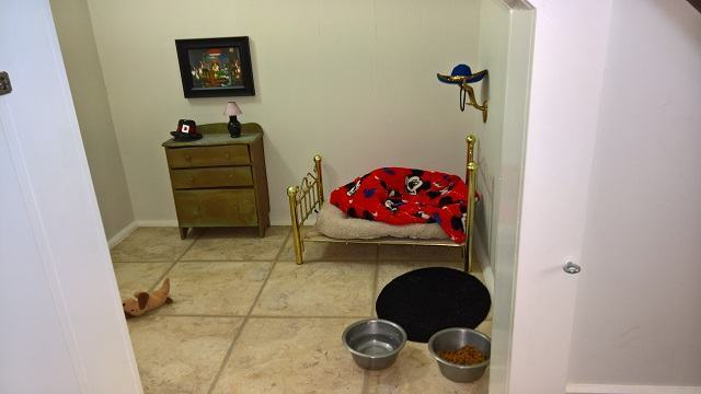 chihuahua-ganha-quarto-embaixo-de-escadas