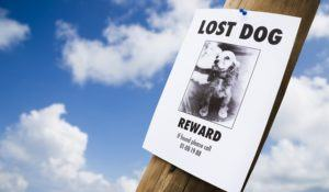 lost puppy poster on a lightpost
