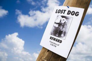 Como fazer um cartaz para anunciar que um cão está perdido