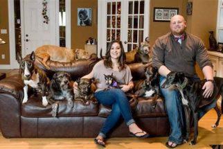 Casal constrói cama gigante para dormir com seus oito cães