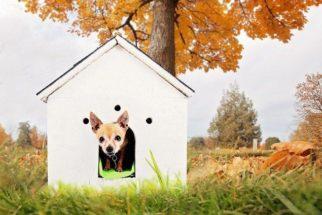 Cuidados com os cachorros que vivem no quintal de casa