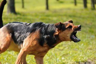 Descubra o que fazer se um cão tentar lhe atacar