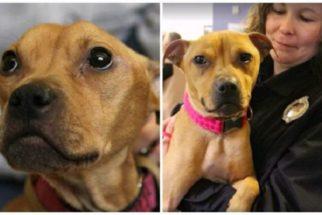 Cadela é adotada por policial que a salvou de maus-tratos