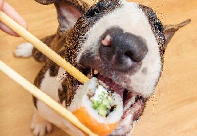 Fique sabendo: cachorro pode comer arroz?