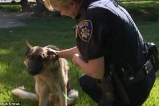 Com pata quebrada, cadela é adotada por policial que a resgatou