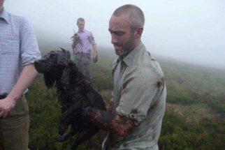 Herói: homem entra em buraco de lama para salvar cão