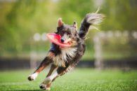 Incríveis brincadeiras ao ar livre para os cães